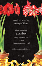 Red Amaryllis Beautiful Invitations